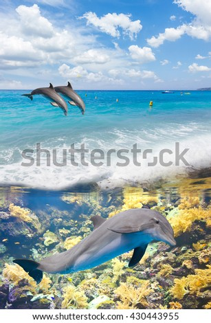 seascape with turquoise sea, underwater life and jumping dolphins - stock photo