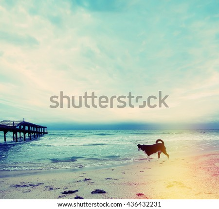 Seascape with wooden pier and dog. Landscape photo with vintage effect - stock photo