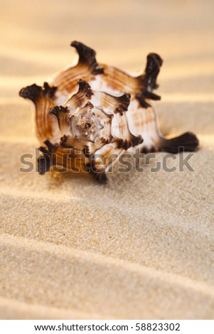 seashell and  sand with brigth warm light, shallow dof - stock photo