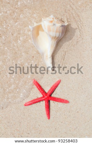 seashell and starfish in white sand beach as summer vacation symbols - stock photo