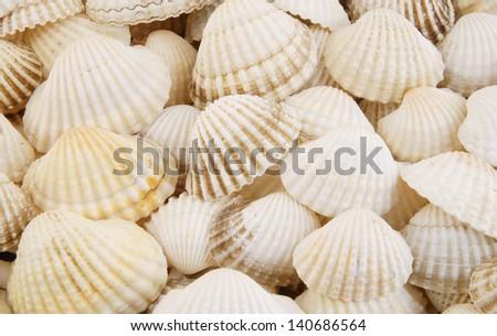 stock-photo-seashell-background-14068656