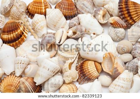 Seashell background - stock photo