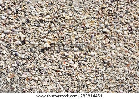 Seashell Background - Pile of Seashells washed up the beach - stock photo
