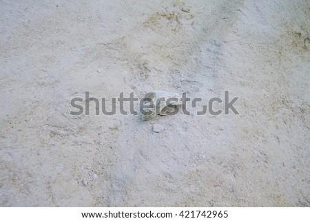 seashell broken at the bottom of sandy ocean - stock photo