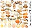 Seashell collection - stock photo