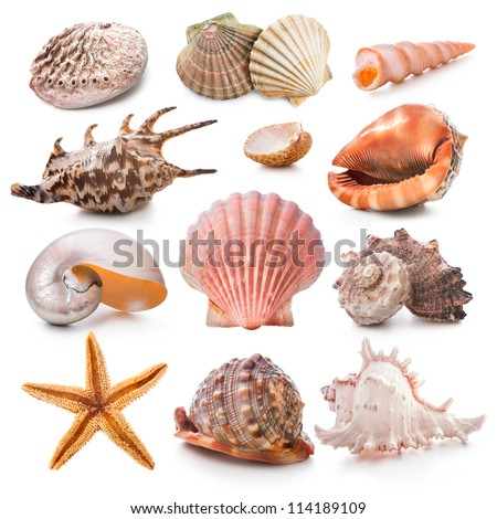 Seashell collection isolated on the white background - stock photo