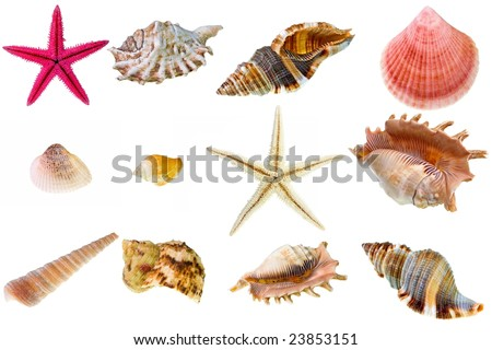 Seashell collection on white background. The high resolution detail photos with clipping path are to be found in my portfolio - stock photo