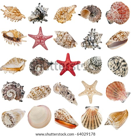 Seashell collection set  isolated on white background - stock photo