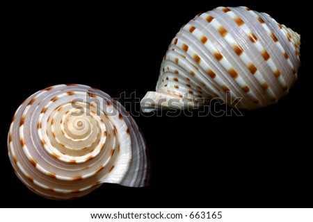 Seashell from front and side