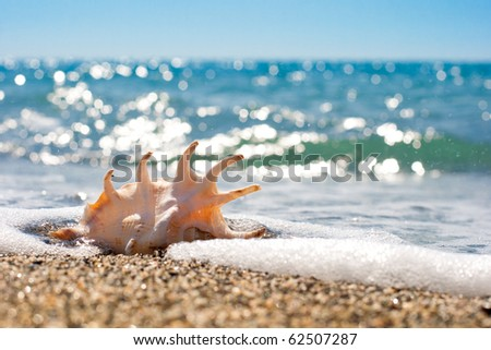 seashell in surf and sand of seashore - stock photo