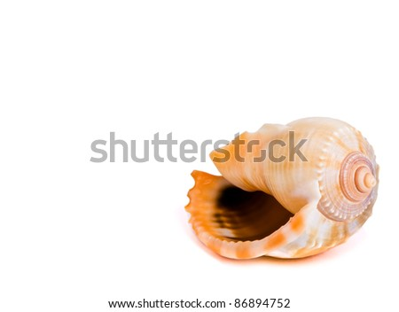 seashell in the corner - stock photo