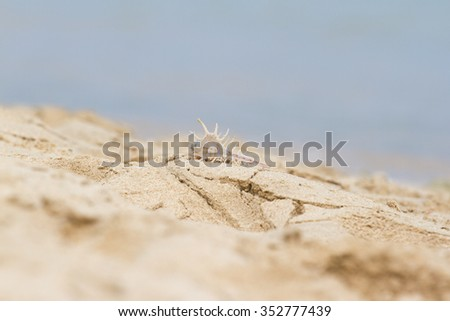 Seashell lies on the beach in the sand - stock photo