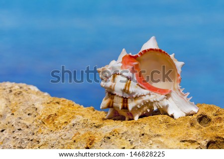Seashell on a rock by the sea. - stock photo