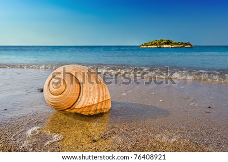 Seashell on a sandy beach in the Mediterranean, washed by sea surfs. - stock photo