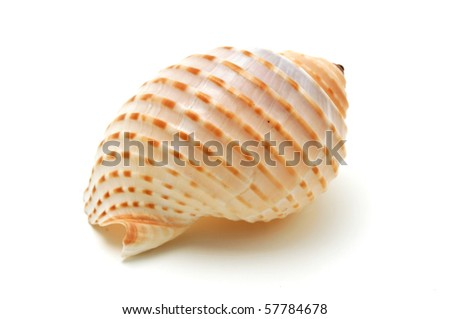Seashell on a white background