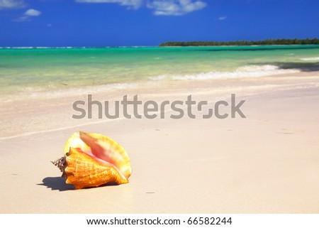 Seashell on beach, closed-up - stock photo