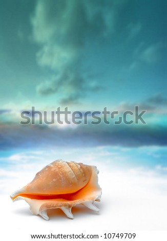 seashell on beach - water reflection - stock photo