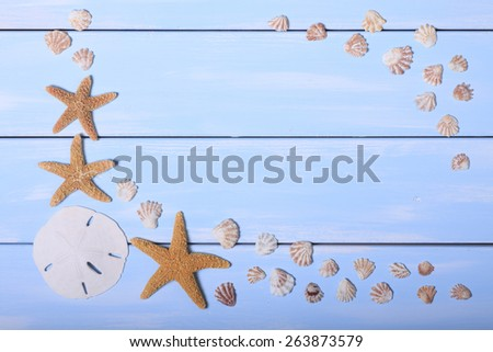 Seashell on blue background with Sand Dollar and Starfish - stock photo