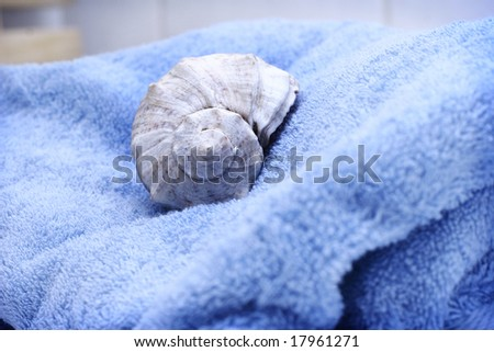 seashell on blue towel
