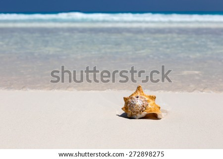 Seashell on caribbean sandy beach, travel concept  - stock photo