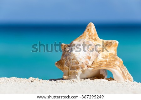 Seashell on caribbean sandy beach, travel concept  - stock photo