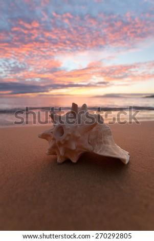 Seashell on the beach in Hawaii during sunset - stock photo