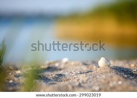 Seashell on the beach in the sand in the rays of the evening sun - stock photo
