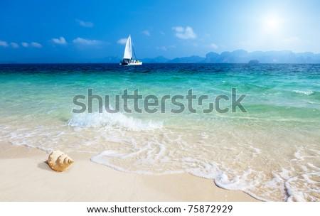 seashell on the beach of Poda island Thailand - stock photo