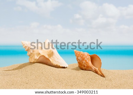 Seashell on the beach, with a tropical sea - stock photo