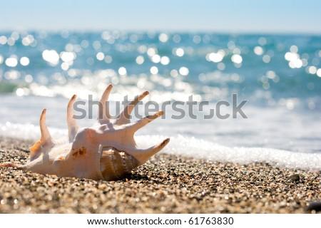 seashell on the sand of seashore - stock photo