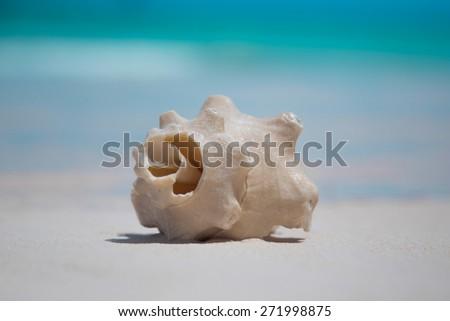 Seashell on the tropical beach - stock photo