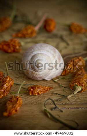 seashell on the wooden table