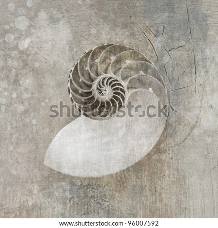 Seashell photograph, sepia toned with artistic textures.