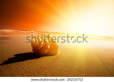 seashell sand and ocean - stock photo
