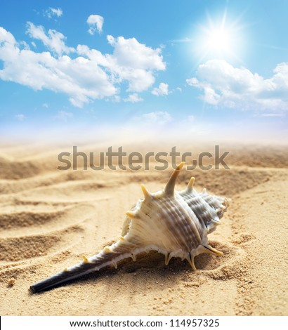 seashell under  blue sky background - stock photo