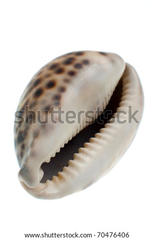 Seashell with dark spots isolate in white background.
