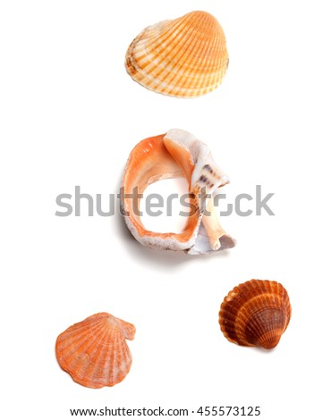 Seashells and broken rapana isolated on white background. View from above. - stock photo
