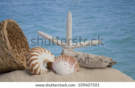seashells and sand on a the sand with ocean in background