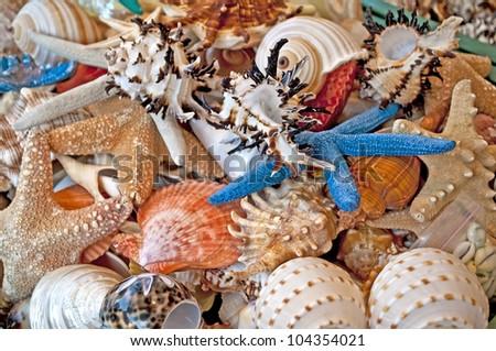 seashells and starfish - stock photo