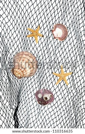 Seashells and starfish caught in a green fishing net for use as an aquatic inference or decorative background. - stock photo