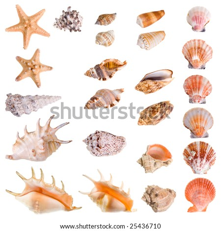 Seashells and starfish collection isolated on white background. Each element has a 8 Mp resolution - stock photo