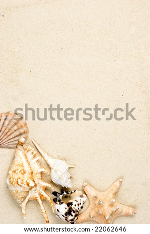 Seashells and starfish on sand background - stock photo