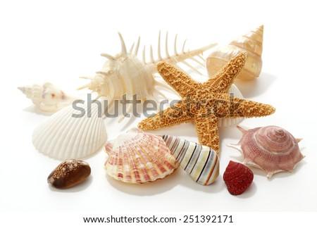 Seashells and starfish on white background - stock photo