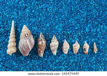 Seashells aranged on blue background - stock photo