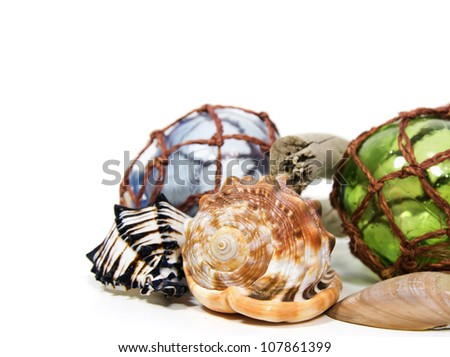 seashells arranged in a still life display on a white background