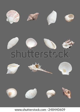 Seashells collection isolated on gray background. - stock photo