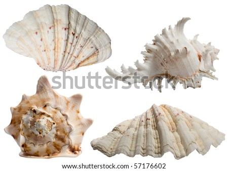 Seashells collection isolated on white - stock photo