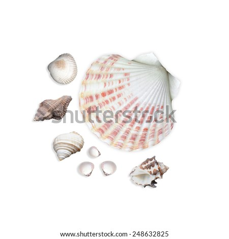 Seashells collection isolated on white background - stock photo