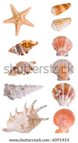 Seashells collection isolated on white background. Each element has a 8 Mp resolution