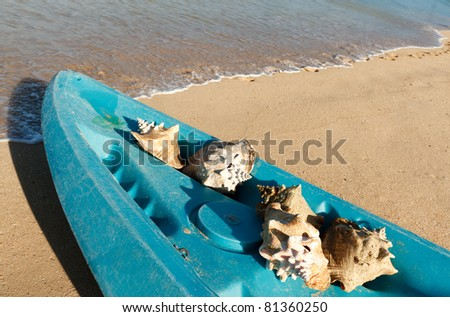 Seashells in a kayak on a tropical beach - stock photo